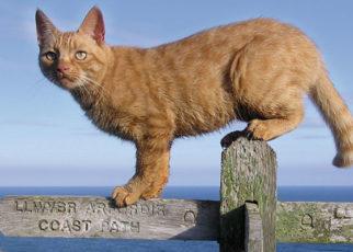 Cat Walk by Jackie Morris